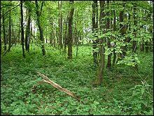 Une forêt où prédomine le chêne porte le nom de ...