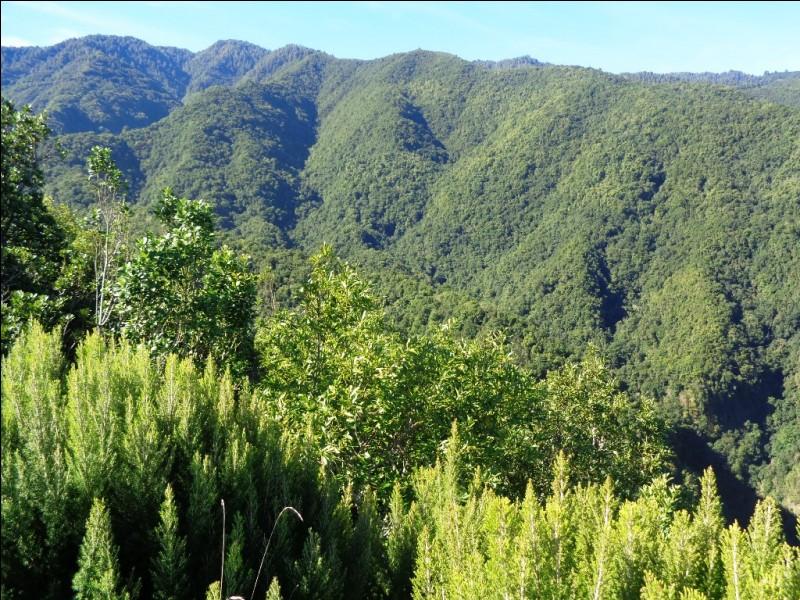 Le relief et le climat de La Palma lui permettent d'abriter une forêt exubérante située entre environ 800 et 1400 mètres d'altitude grâce au brouillard qui l'enveloppe régulièrement. Quel nom porte cette forêt presque unique au monde ?