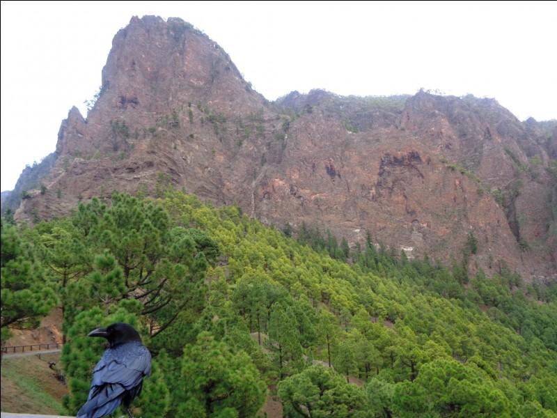 """De quel type d'installation les sommets de La Palma, aux alentours du """"Roque de los Muchachos"""", présentent-ils une importante concentration ?"""