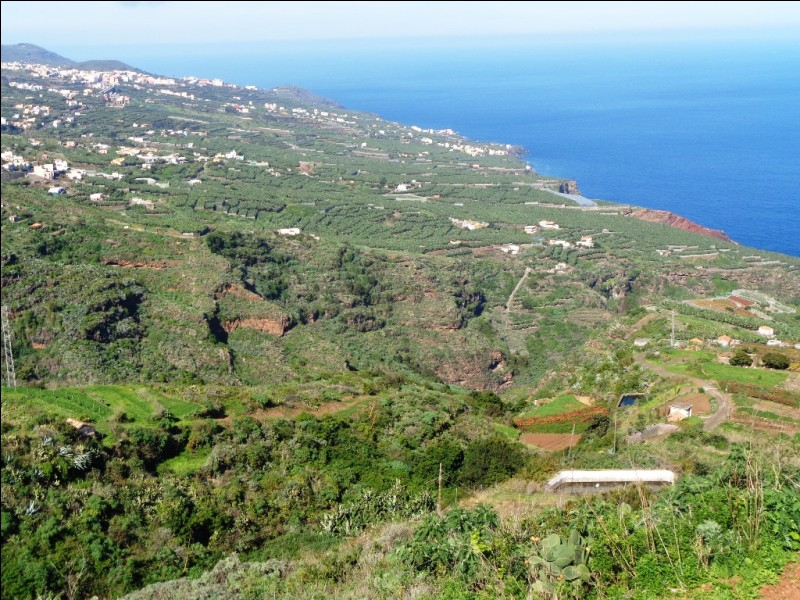 Parmi ces propositions, laquelle ne fait pas partie des principales cultures sur l'île de La Palma ?