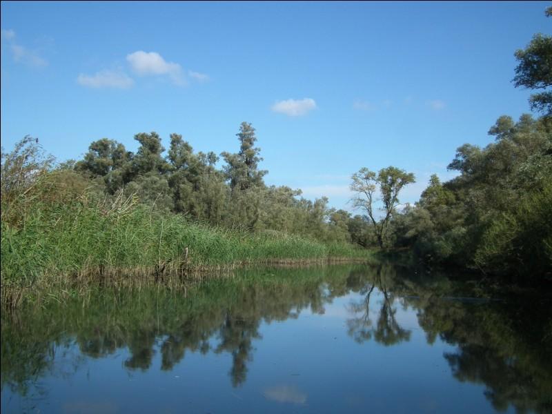 """""""De Biesbosch"""" est l'une des plus grandes zones humides ainsi que l'un des plus grands parcs naturels de quel pays ?"""