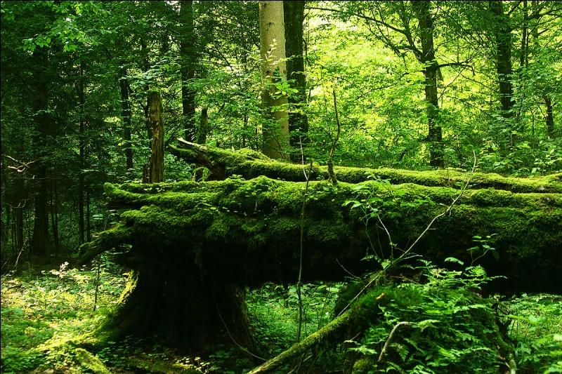 La forêt de Bialowieza, avec son grand troupeau de bisons et autres animaux sauvages, est partagée entre deux pays. Lesquels ?