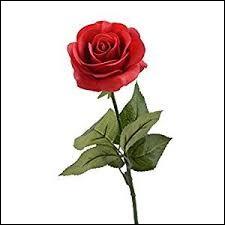 """De qui est la citation : """"Et rose, elle a vécu ce que vivent les roses, l'espace d'un matin"""" ?"""