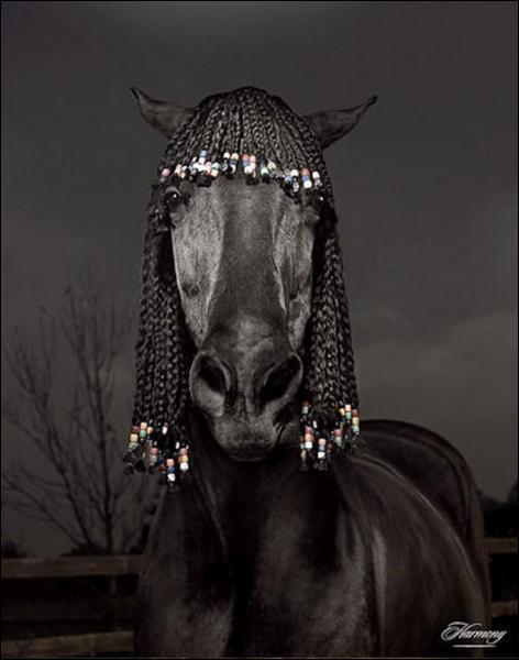 Et pour finir, la robe de ce cheval ?