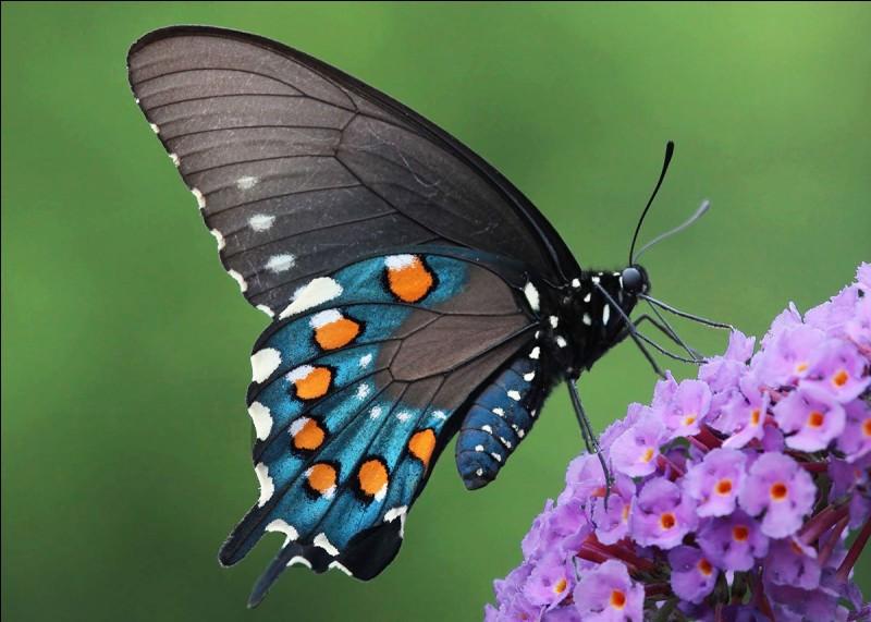 """""""Papillon"""" réunit à l'écran..."""