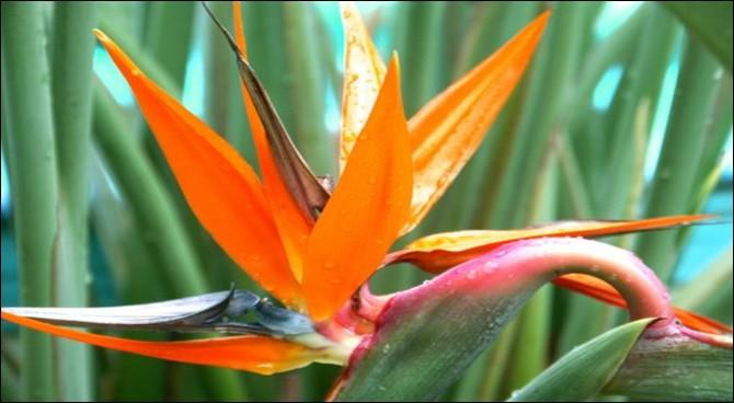 Vous devriez facilement trouver le nom de cette fleur, c'est aussi celui d'un animal !