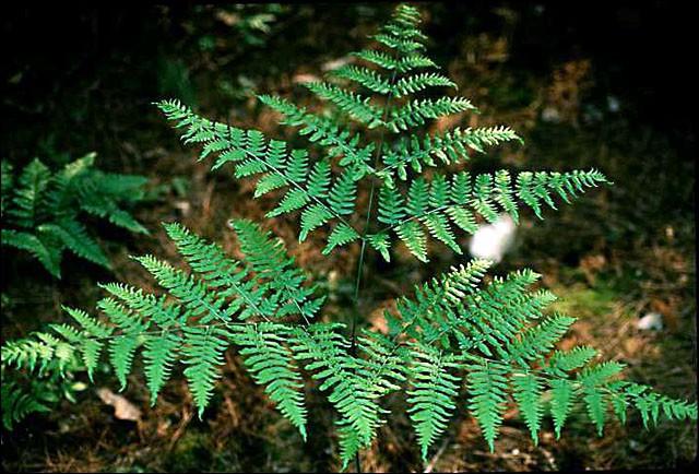 Elle foisonne dans les forêts, mais peu d'entre nous connaissent son appellation !
