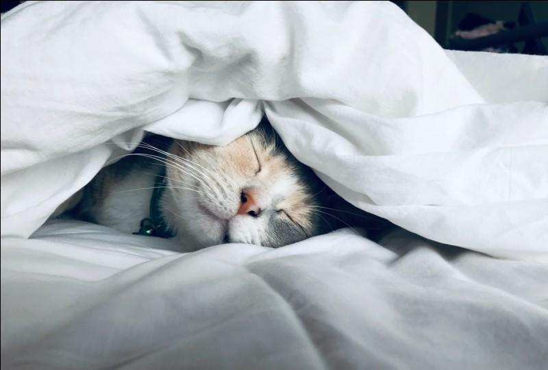 Pendant combien de temps dors-tu, en général ?