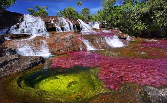 Le Caño Cristales (en photo) est un affluent du rio Guayabero, situé dans le parc national de la Macarena. Dans quel pays d'Amérique du Sud, frontalier du Brésil, peut-on l'admirer ? Vidéo à voir !