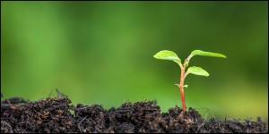Qu'est-ce qu'une plante vivace ?