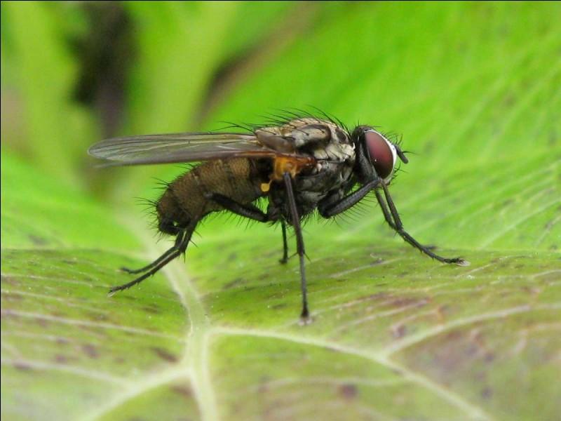 Quand une plante est envahie d'œufs d'insectes, quel va être ton premier réflexe ?