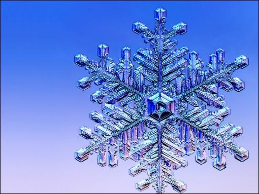 Qu'est-ce que le gel va faire de nuisible à la plante ?