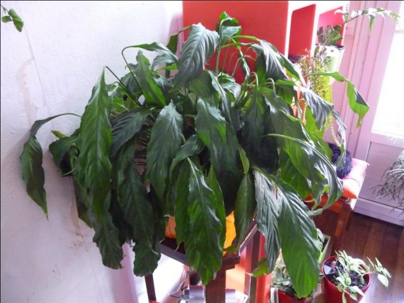 D'après cette photo, que faut-il faire pour que la plante soit en meilleure santé ?