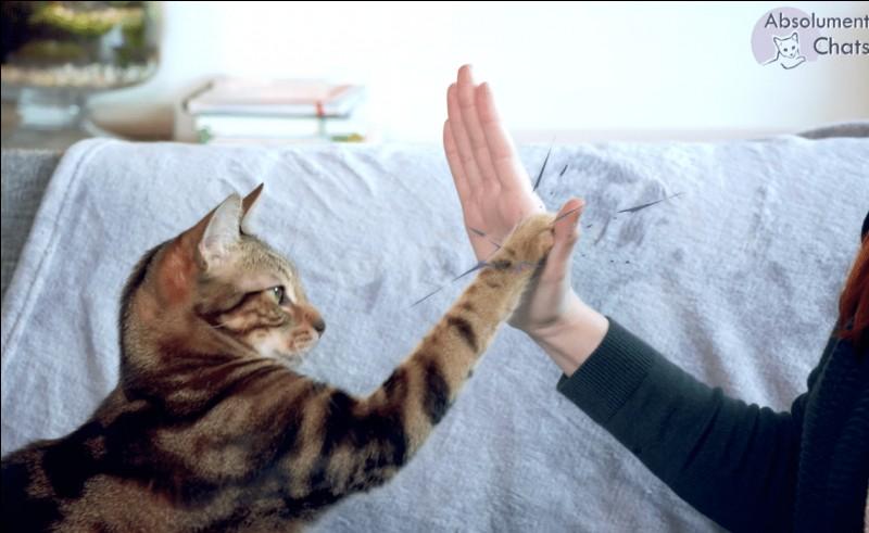 """""""Quoi de neuf Pussycat"""" est un film dont le scénario est signé Woody Allen."""