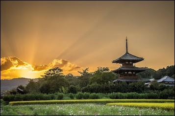 Au Japon, à quoi correspond le Tambo Art ?