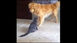 """Retrouvez les identités des deux chiens et de la chatte du film Disney """"L'Incroyable Voyage"""" !"""