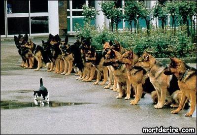 Les chiens ont des propriétaires, les chats ...