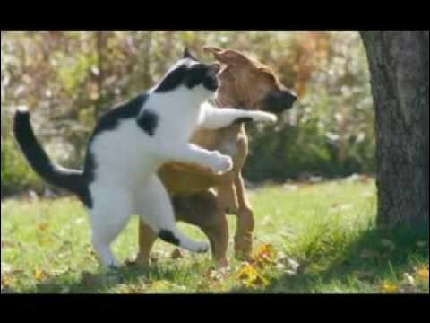 Un chien que vous nourrissez et abreuvez pensera que vous êtes Dieu, si vous faites la même chose à un chat, ...