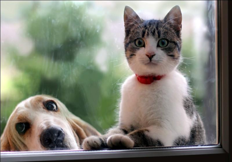 Citation de Marc Escayrol : Un chaton doit apprendre la vie ...