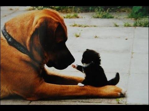 Citation de Paul Valéry : Tout le chien ...