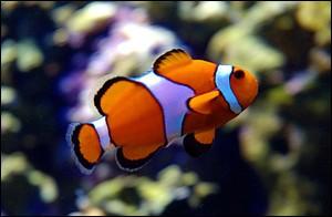 Quel est l'organe de respiration des poissons et de la plupart des animaux aquatiques ?