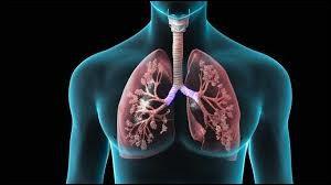 """Lequel de ces termes signifie ''en rapport avec les poumons"""" ?"""