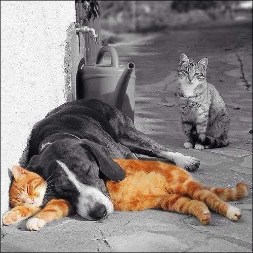 Quelle peine est encourue par un propriétaire abandonnant son animal (sauf s'il l'abandonne à la SPA) ?
