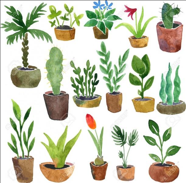 Si ton prénom commence par la lettre S, P, N, M,T, U, W, X ou Z, quel nom de plante commence par la première lettre de ton prénom ?
