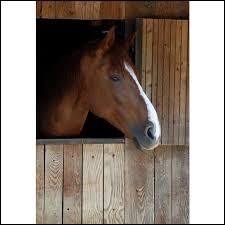 Que faut-il faire dans le box d'un cheval ?