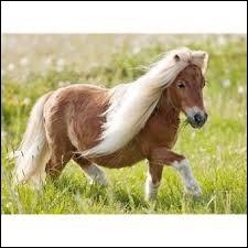 Que sont les Pony-Games ?