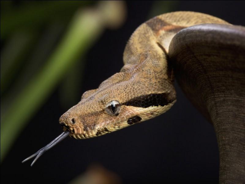 Il paraît que Saint-Patrick aurait fait fuir tous les serpents d'Irlande ! Comment dit-on serpent en irlandais ?