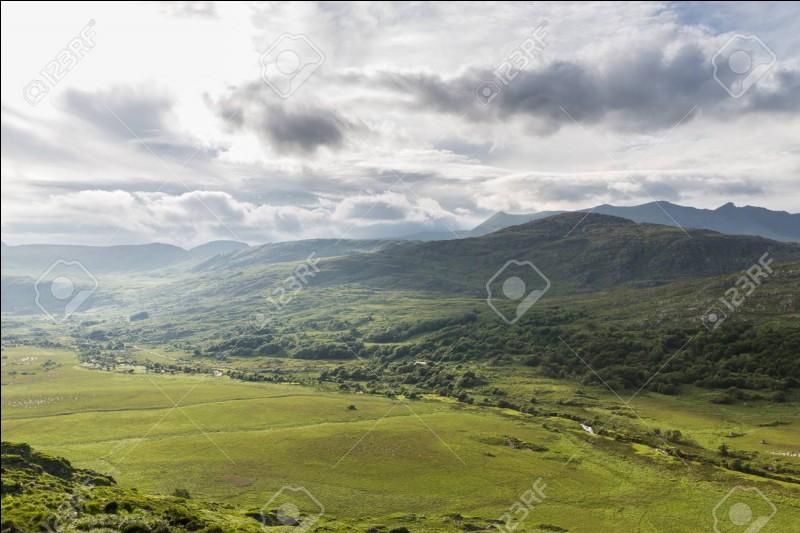 """Les plaines irlandaises regorgent d'animaux merveilleux ! Comment dit-on """"animaux"""" ?"""