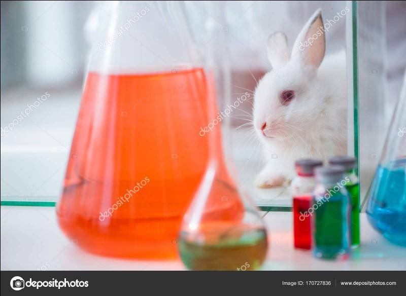 """Le nom scientifique du mot """"lapin"""" est..."""