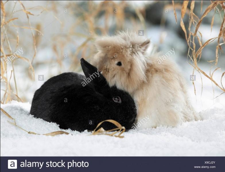 Les lapins viennent de...