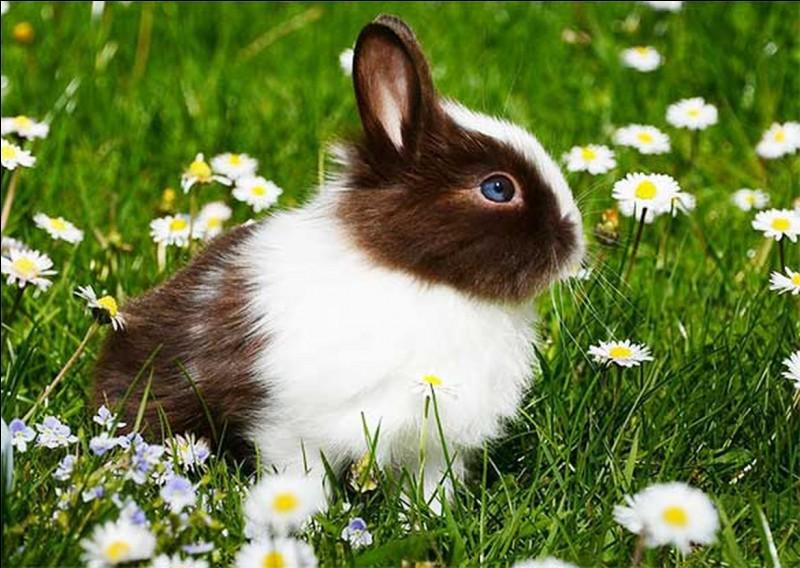Il vaut mieux acheter un lapin...