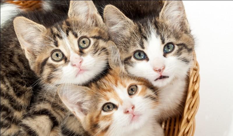 Combien y a-t-il de chats sur cette image ?