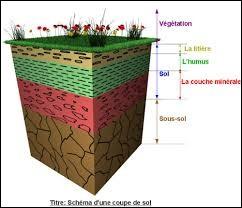 La formation du sol dépend de...