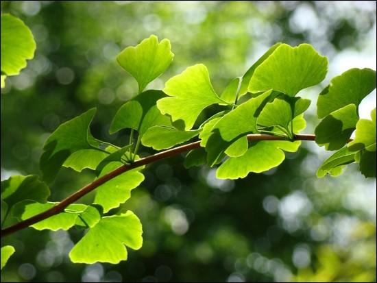 Les végétaux chlorophylliens sont des producteurs...