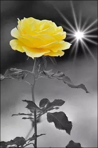 Si la rose jaune symbolise aujourd'hui l'amitié, de quoi était-elle le signe autrefois ?