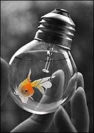 Qui finalisa l'invention de l'ampoule électrique ?