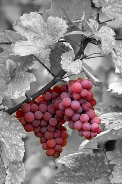 """""""La Vigne rouge"""" fut le seul tableau qu'il vendit de son vivant. Qui est cet artiste, ayant vécu à Arles, et à Auvers-sur-Oise, longtemps hospitalisé à Saint-Rémy-de-Provence ?"""