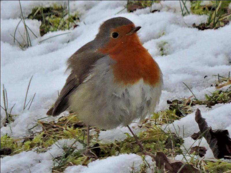 Je connais les brumes claires - La neige rose des matins d'hiver !