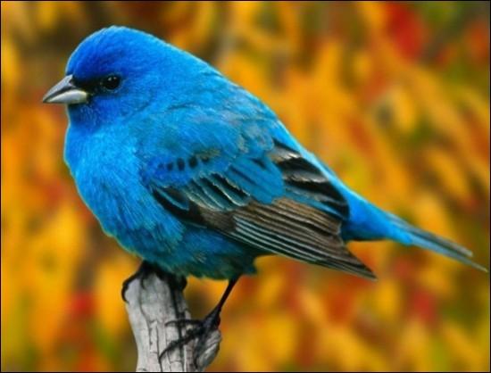 Ca vit d'air pur et d'eau fraîche un oiseau !