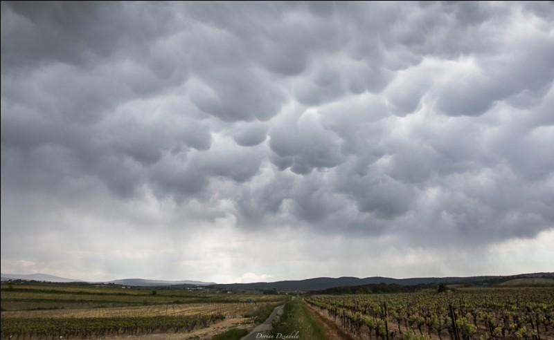 M : Mamma : ces nuages en forme de pis sont généralement associés aux...