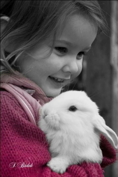Quel est le nom de la maladie virale hémorragique du lapin, mortelle et foudroyante ?