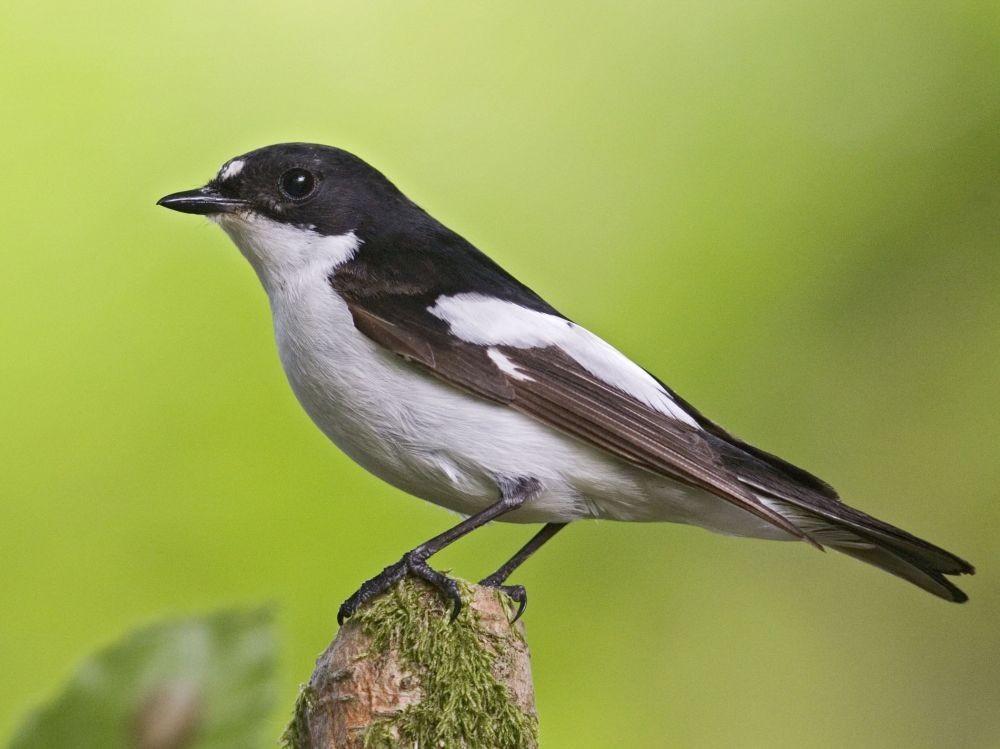 Les oiseaux (10)
