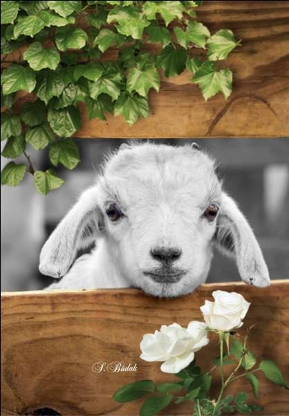 """Qui a écrit """"Le Silence des agneaux"""" ?"""
