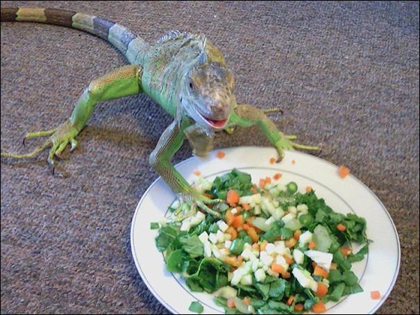 Je l'ai trouvé dans ''Smiling Animals'', accompagné par ce petit commentaire : ''Elle sourit chaque fois que nous lui servons sa salade préférée''.Belle salade, qui sera mangée par un ... ?