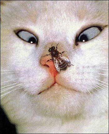 O.K. il n'est pas souriant le minet mais à sa décharge, le seriez-vous, vous avec cela sur le nez ? Il est quand même songeur et il se dit que, s'il ne fait rien, peut-être que...Mais au fait, qu'est-ce que le chat regarde sur son nez ?