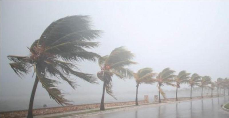 """Qui chante """"Ouragan"""" ?"""